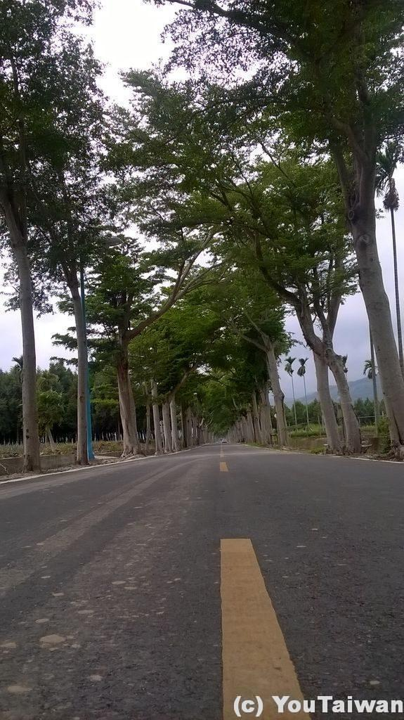 龍天村のまっすぐな道